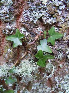 Pflanzenausbildung - mit den Pflanzen durch ihre Jahr