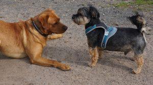 Tierverhalten: Tirza Kirchner geht dem unerklärlichem Verhalten Ihres Tieres auf den Grund.