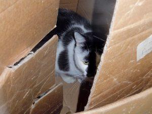 Vermisste Tiere: Tirza Kirchner bietet auch Tierkommunikation mit Tieren, die von ihren Besitzern vermisst werden.