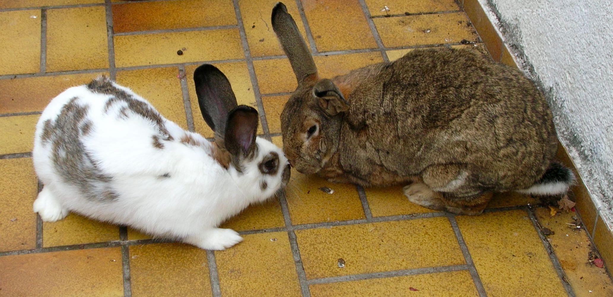 Informationsveranstaltung Tierkommunikation