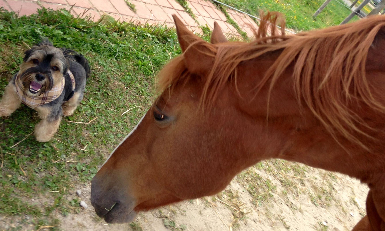 Übungsabend rund um die Tierkommunikation