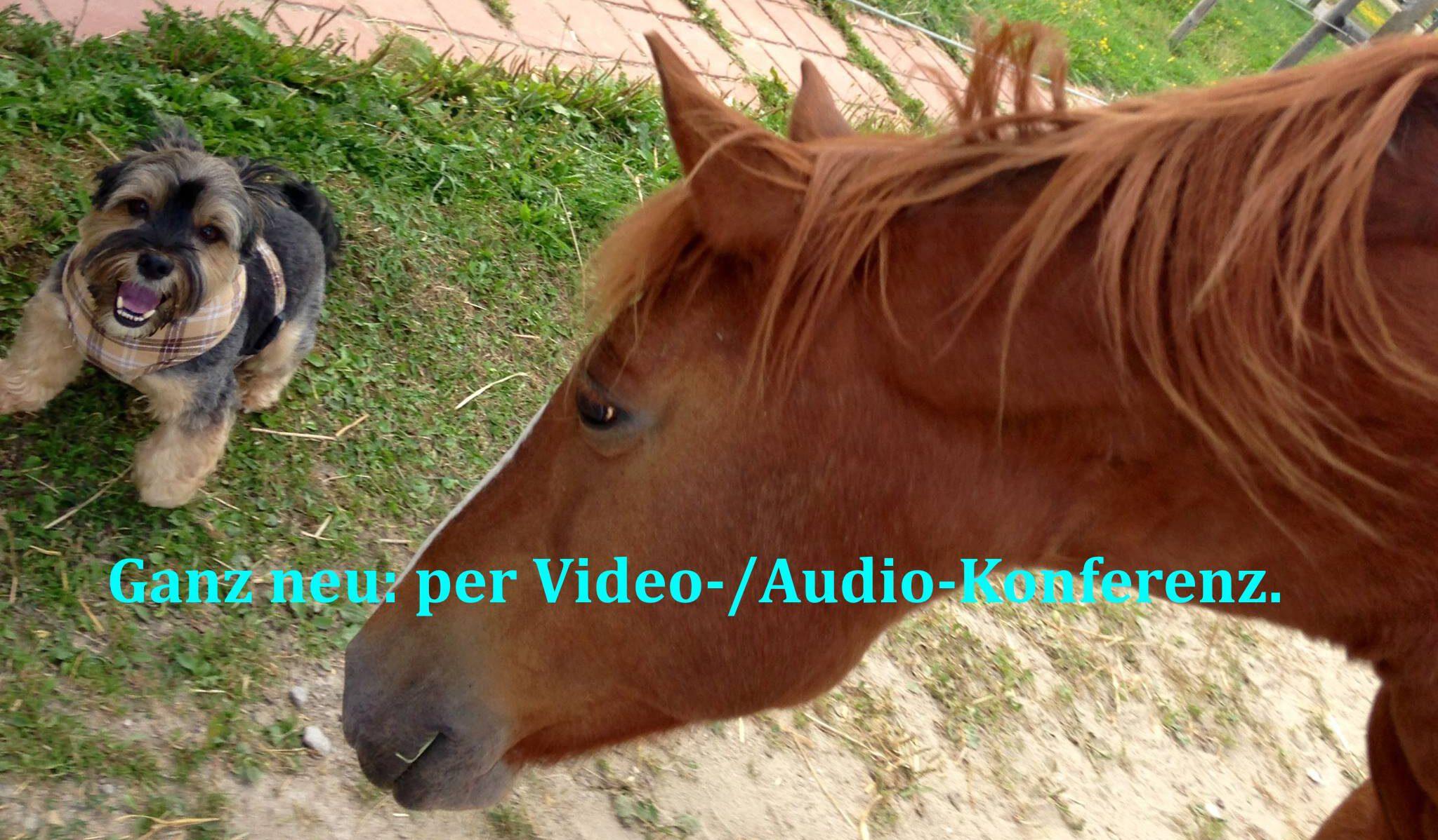 Online-Übungsabend Tierkommunikation