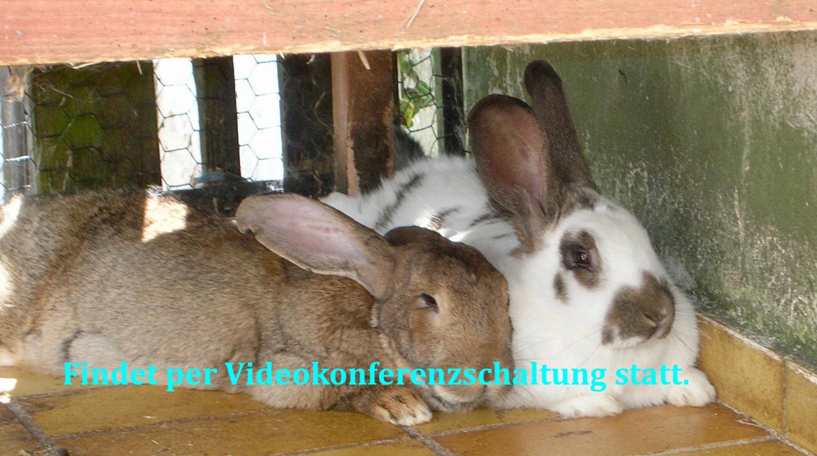 Tierkommunikations-Aufbauseminar - Verstorbene Tiere