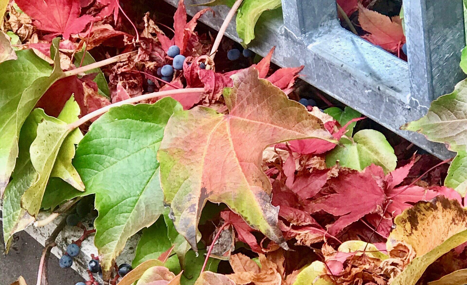 Pflanzenseminar Herbst